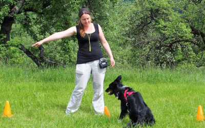 Rally Obedience – Neuer Kurs ab November